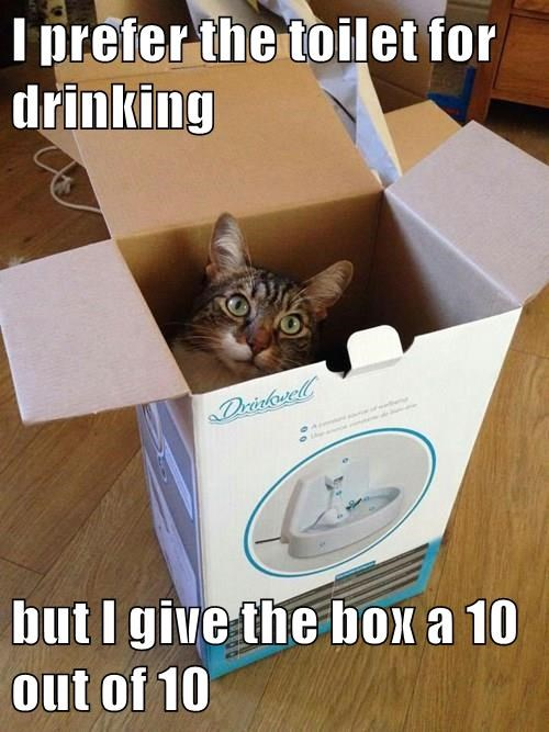 I prefer the toilet for drinking  but I give the box a 10 out of 10