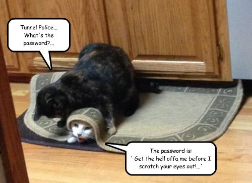Tunnel Police... What's the password?... The password is: ' Get the hell offa me before I scratch your eyes out!...'