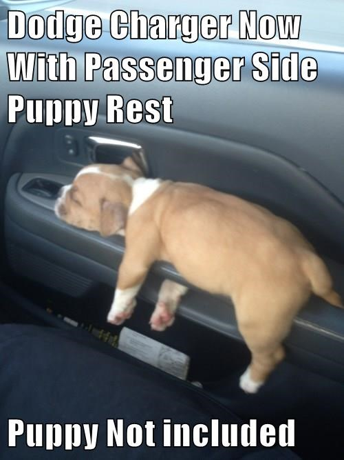 puppy,car,cute