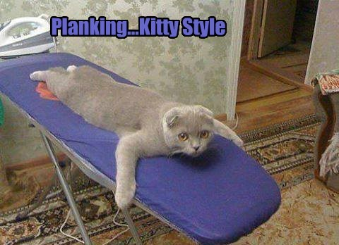 cat,Planking,iron,yoga