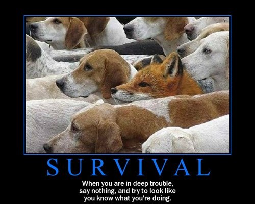 demotivational survival image Also How to Be an Adult