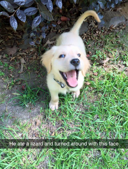 funny dog image puppy grins after eating lizard