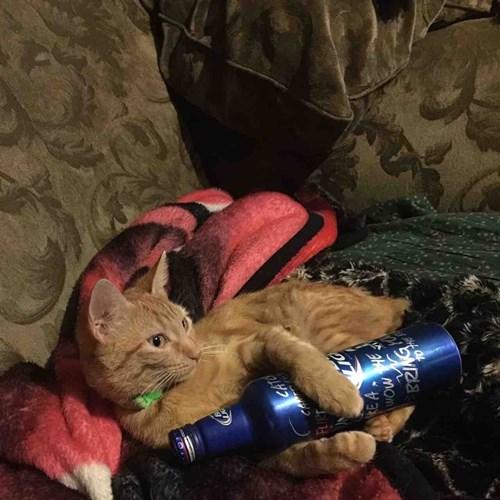 Cat - FLICT RE A BRIAG