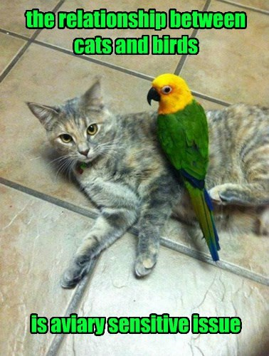 birds captions puns Cats funny - 8503586560