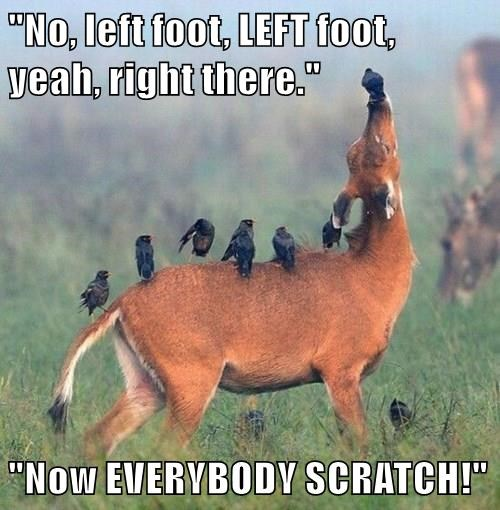 animals captions deer funny - 8503631104