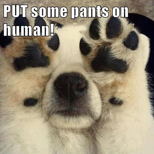 paws,dogs,pants,covered eyes