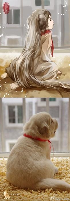 Dog - momods