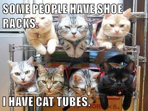 racks,boxes,tubes,Cats