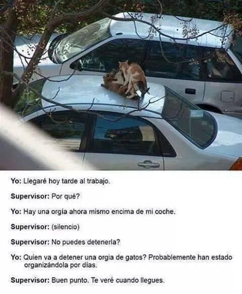 orgia de gatos