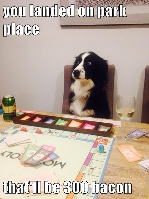 animals games dogs monopoly bacon