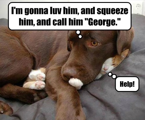 "I'm gonna luv him, and squeeze him, and call him ""George."" Help!"