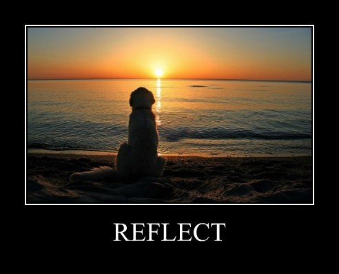 dogs poster ocean reflect - 8504798720
