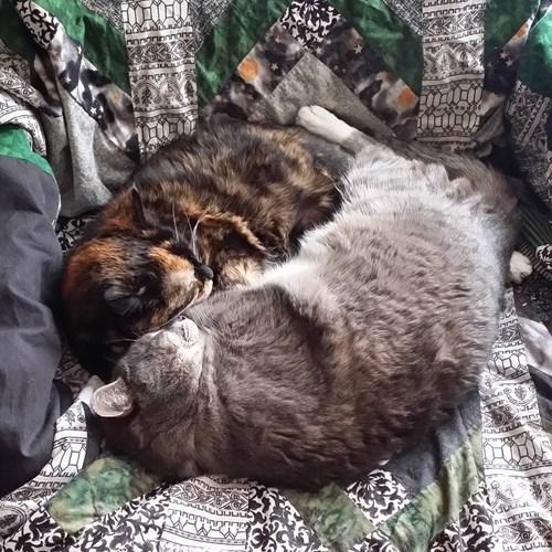 Cat - onnononand JULJU
