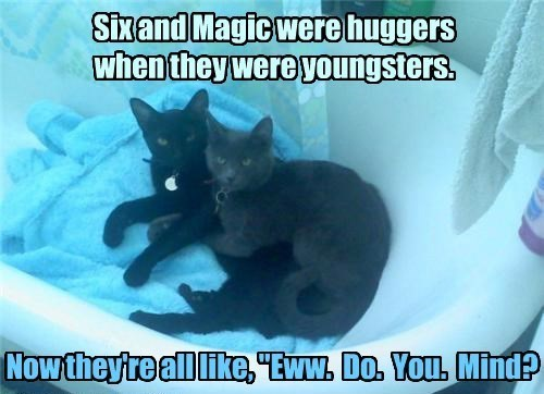 Cat - Sixand Magic were huggers when they were youngsters. Now theyreall like, Eww. Do. You. Mind?