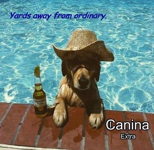 dogs Ad summer corona pool - 8504966144