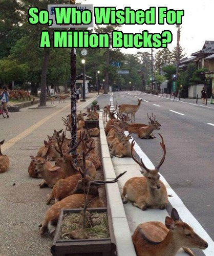 captions,deer,funny
