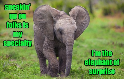 elephant captions puns funny - 8505277184