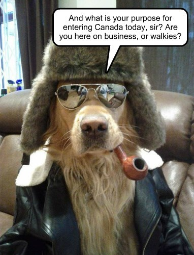dogs captions funny - 8505329664