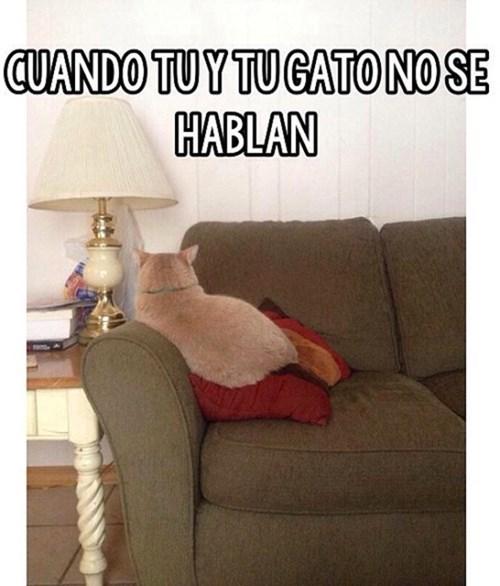 tu gato y tu