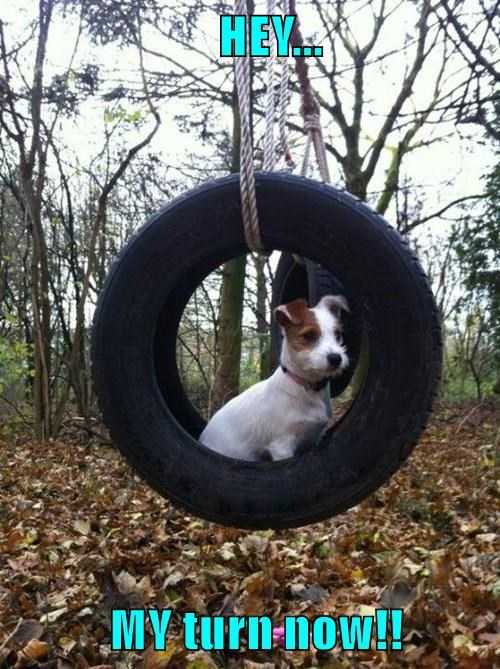 dogs,tire,swing