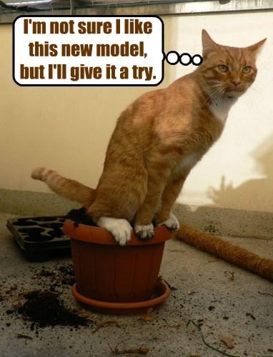 captions Cats funny - 8505889280