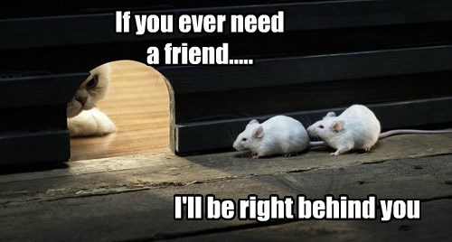 mice,caption,Cats,funny