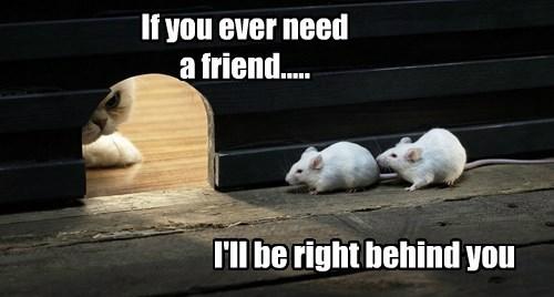 mice caption Cats funny - 8505923584