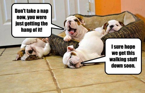 puppies,bulldogs,naps