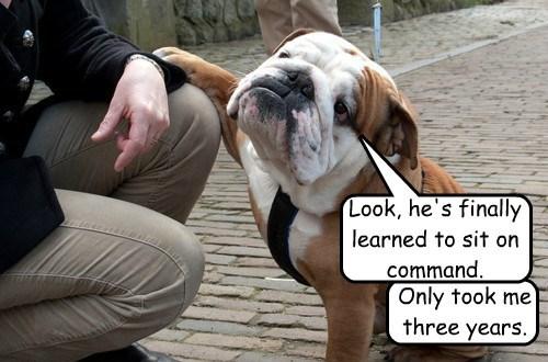 dogs bulldog human trick - 8506418176