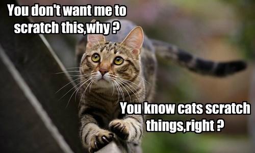 scratching Cats - 8506418432