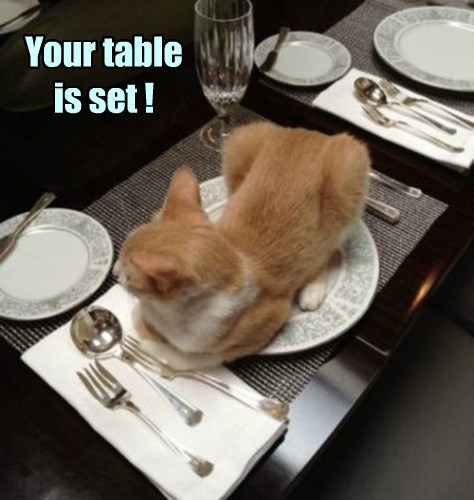 cat,plate,table
