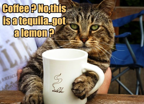 cat tequila coffee - 8506448128