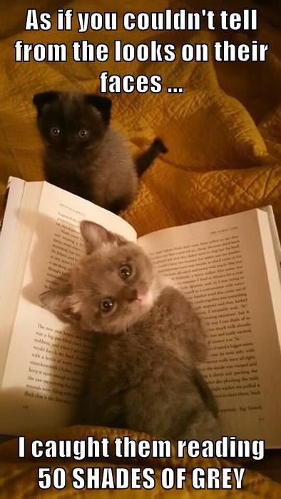 kitten,cute,books,50 shades of grey