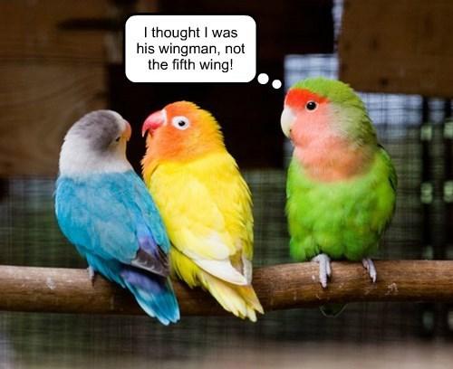 birds,puns