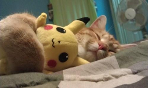 pokemon memes pikachu cat cuddles