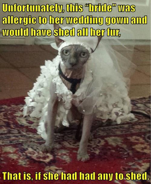 animals costume cat wedding dress hairless - 8506497024