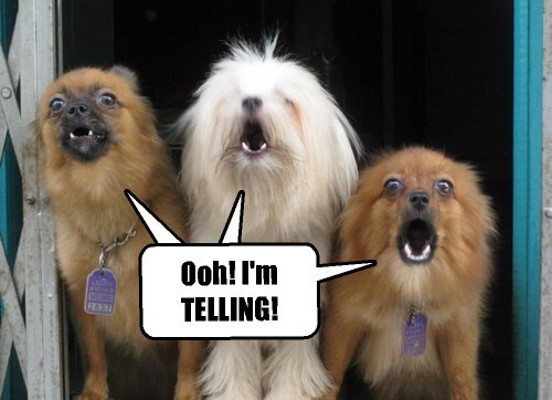 dogs captions funny - 8506577152