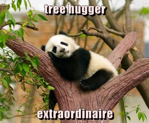 animals panda cute caption - 8506663680