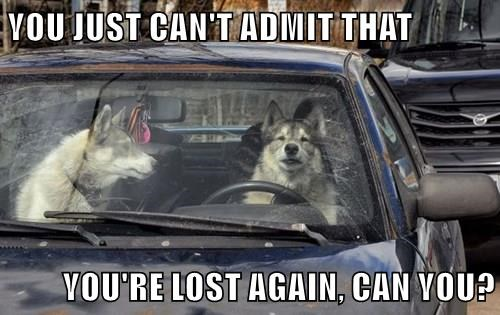 animals dogs captions funny - 8506694400