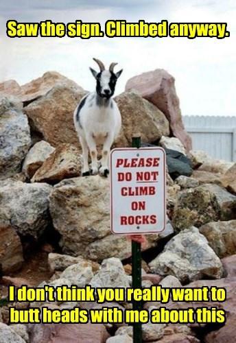 goat caption funny - 8506778368