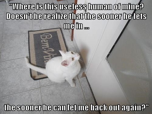 cat,captions,funny