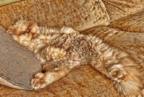cute cats image This Couch is Perfect for a Nap