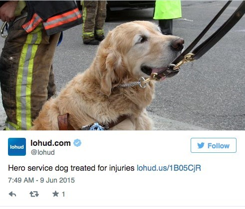 cute dogs news Hero Service Dog Saves Owner's Life