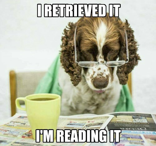 Dog - IRETRIEVED IT IM READING IT