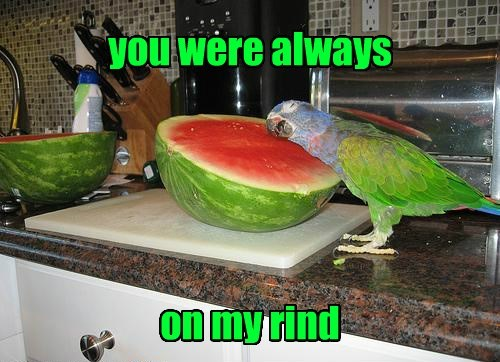you were always on my rind