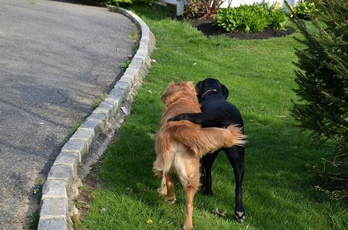 cute dogs friends These Friends Walking Side by Side