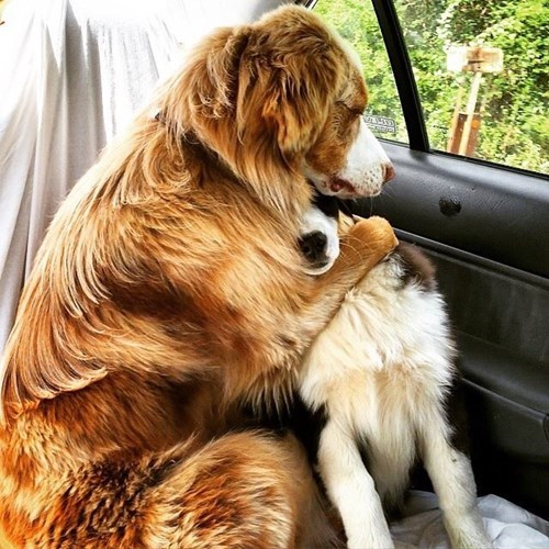 cute dogs friends These Dogs Comforting Each Other on the Way to the Vet