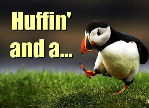 puffin puns caption - 8507256064