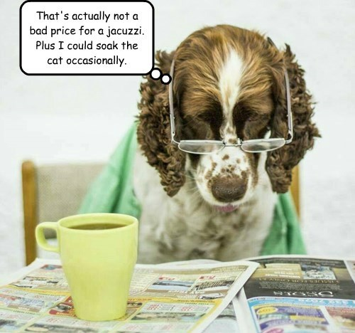 dogs captions funny - 8507284992