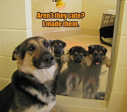 dogs captions cute - 8507345408